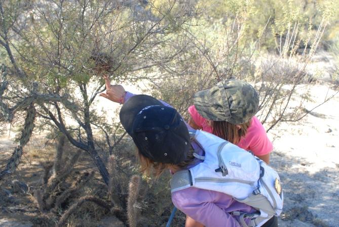 Leonie and Abbie spot a cactus wren nest.