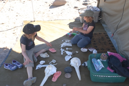 Dolphin skulls among the treasures they've found.