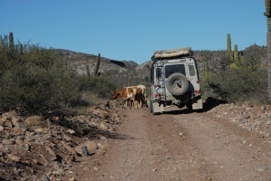 Challenges included terrain, rocks, cactus, and cows.