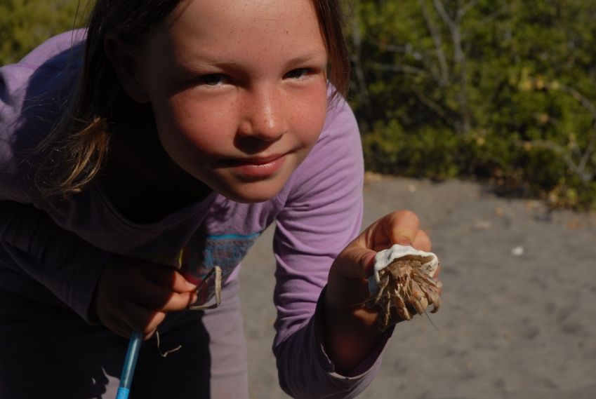 As ever, crabs and their camouflage are NO MATCH for our little huntress.