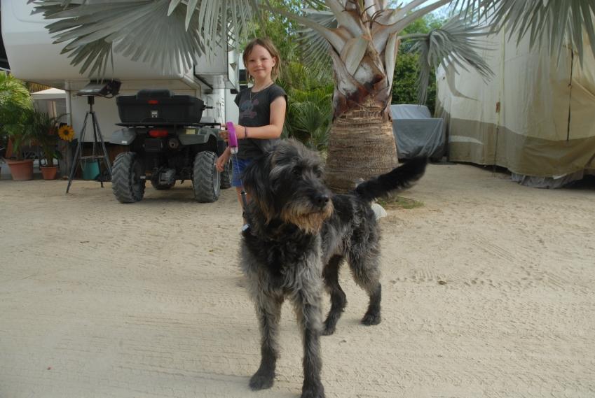Bea's big dog, Indigo, being taken for a stroll by Leonie.