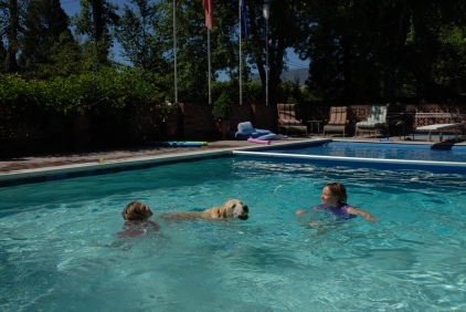 Reno has pools, and dogs, and tennis balls, and dogs that jump into pools to get tennis balls. A hit.