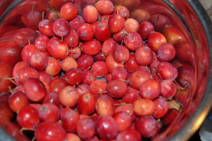 Oh and also wild crabapples.