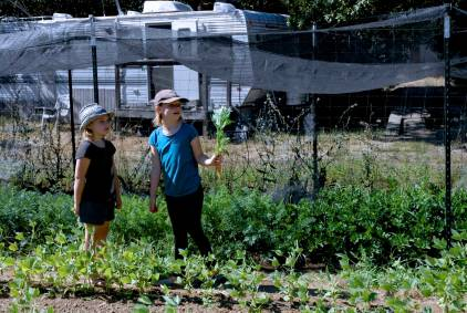 Girls debating carrots or chard.